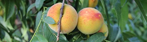 Exportar fruta a China