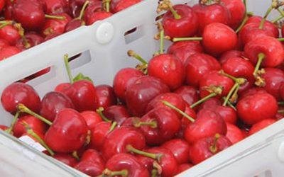 El Año Nuevo Chino, oportunidad para los exportadores de cerezas.